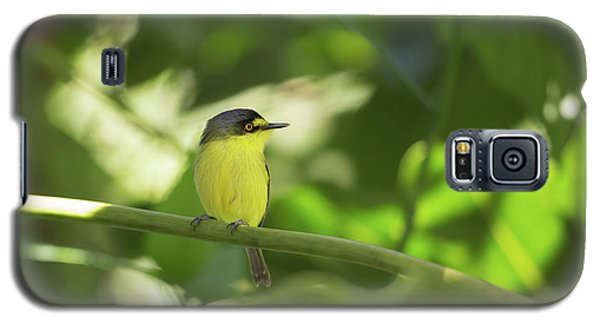 A Yellow-lored Tody Flycatcher Galaxy S5 Case