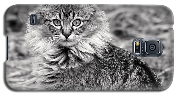 Galaxy S5 Case featuring the photograph A Young Maine Coon by Rona Black