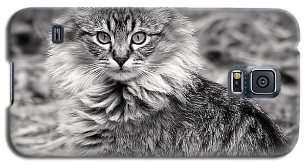A Young Maine Coon Galaxy S5 Case