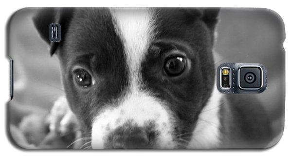 Abby The Rescued Dog Galaxy S5 Case by Deborah Fay