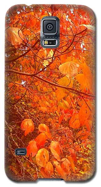 Galaxy S5 Case featuring the photograph Ablaze by Elizabeth Carr