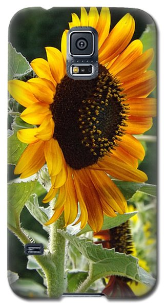 Galaxy S5 Case featuring the photograph About Face by Elizabeth Sullivan