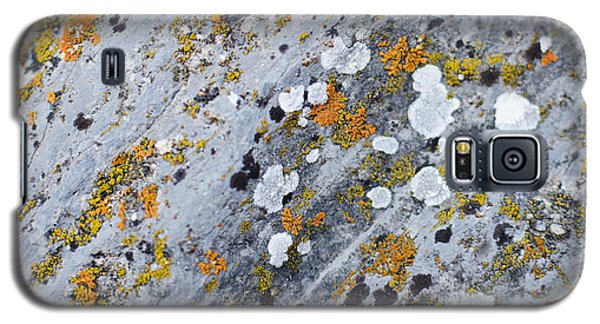 Abstract Orange Lichen 2 Galaxy S5 Case by Chase Taylor