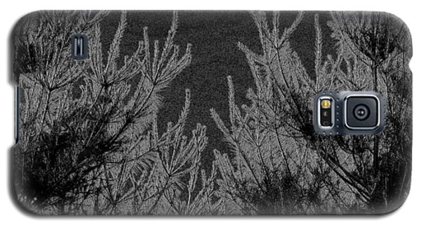 Abstract Pine Trees Galaxy S5 Case