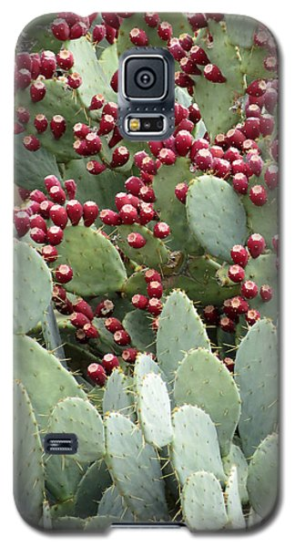 Galaxy S5 Case featuring the photograph Abundance Of Fruit by Laurel Powell