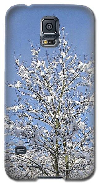 Ash Tree In Winter Galaxy S5 Case