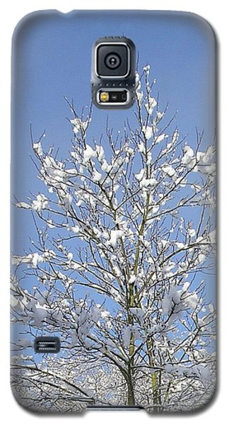 Ash Tree In Winter Galaxy S5 Case