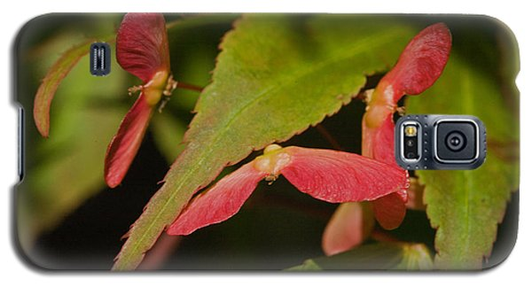 Galaxy S5 Case featuring the photograph Acer Wings by Liz  Alderdice