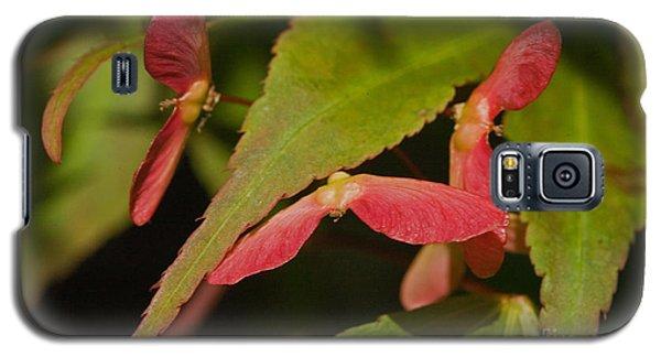Acer Wings Galaxy S5 Case by Liz  Alderdice