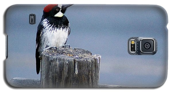 Acorn Woodpecker Galaxy S5 Case by Gary Brandes