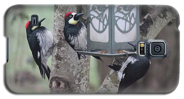 Acorn Woodpeckers Galaxy S5 Case