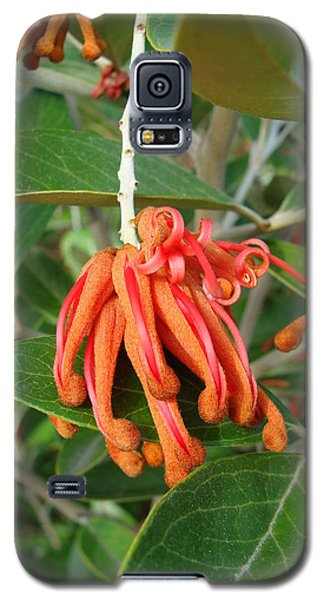 Galaxy S5 Case featuring the photograph Adaptable Exotic by Cheryl Hoyle