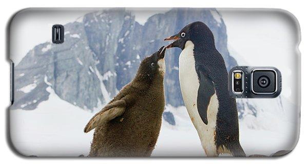 Adelie Penguin Chick Begging For Food Galaxy S5 Case by Yva Momatiuk John Eastcott