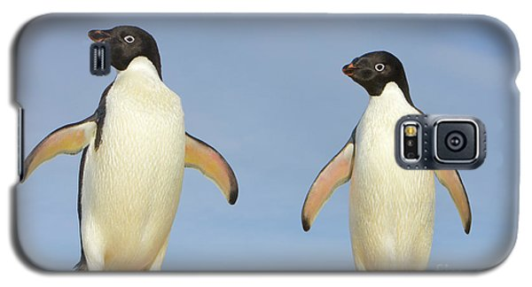 Adelie Penguin Duo Galaxy S5 Case by Yva Momatiuk John Eastcott
