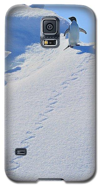 Adelie Penguin On Bergie Bit Galaxy S5 Case