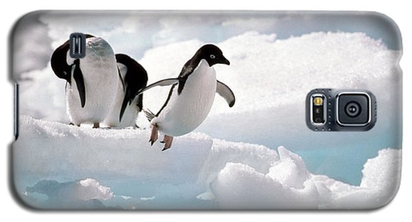Adelie Penguins Galaxy S5 Case