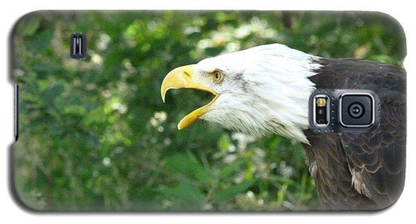 Galaxy S5 Case featuring the photograph Adler Raptor Bald Eagle Bird Of Prey Bird by Paul Fearn