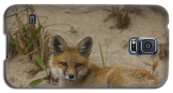 Adorable Baby Fox Galaxy S5 Case by Amazing Jules