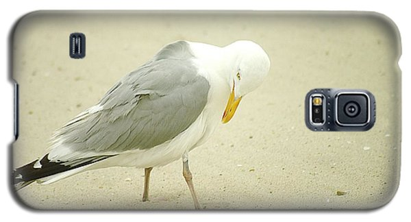 Galaxy S5 Case featuring the photograph Adult Seagull Preening by Suzanne Powers