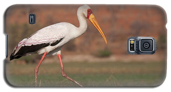 Africa, Botswana, Chobe National Park Galaxy S5 Case
