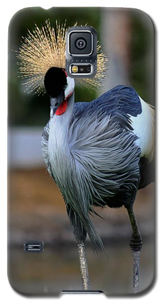 African Crowned Crane Running Galaxy S5 Case