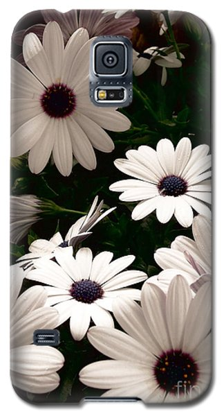 Galaxy S5 Case featuring the photograph African Daisies by Debi Dmytryshyn