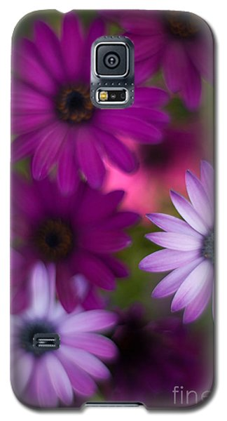 African Daisy Collage Galaxy S5 Case