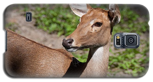 Galaxy S5 Case featuring the photograph African Deer by John Black