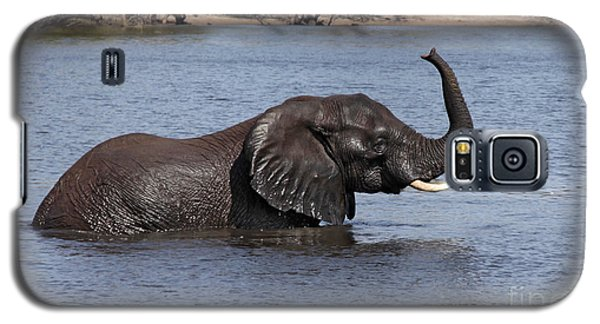African Elephant In Chobe River  Galaxy S5 Case