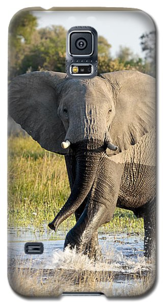 African Elephant Mock-charging Galaxy S5 Case