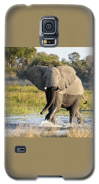 Galaxy S5 Case featuring the photograph African Elephant Mock-charging by Liz Leyden