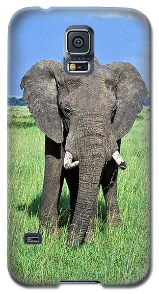 Galaxy S5 Case featuring the photograph African Elephant by Tina Manley