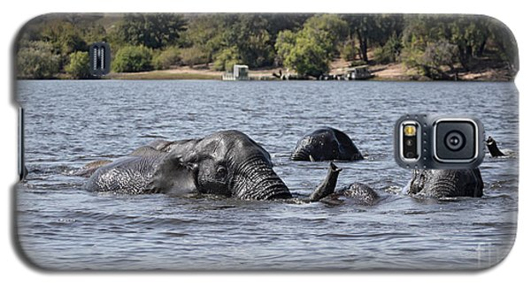 African Elephants Swimming In The Chobe River Galaxy S5 Case