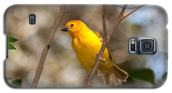 Galaxy S5 Case featuring the photograph African Golden Weaver by John Black