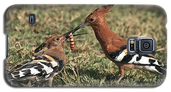 Galaxy S5 Case featuring the photograph African Hoopoe Feeding Young by Liz Leyden