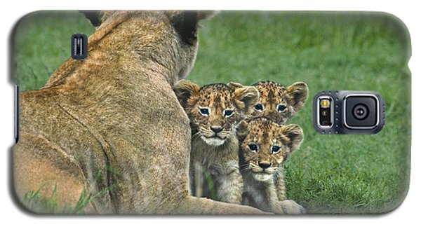 African Lion Cubs Study The Photographer Tanzania Galaxy S5 Case