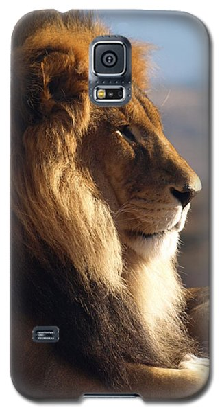 African Lion Galaxy S5 Case by James Peterson