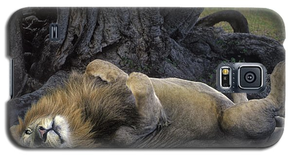 African Lion Panthera Leo Wild Kenya Galaxy S5 Case