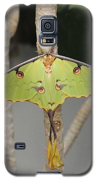 African Moon Moth Galaxy S5 Case
