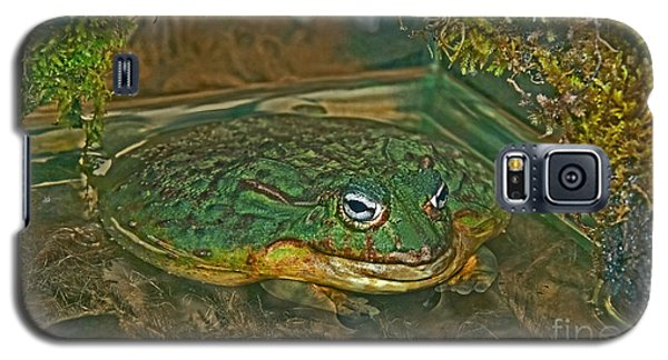 African Pixie Frog In Water Galaxy S5 Case