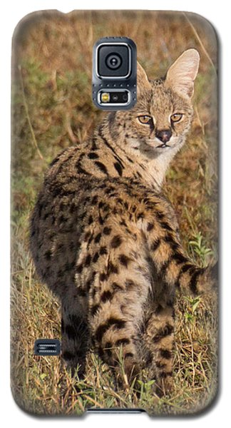 African Serval Cat 1 Galaxy S5 Case