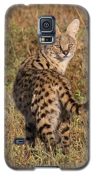 Galaxy S5 Case featuring the photograph African Serval Cat 1 by Chris Scroggins