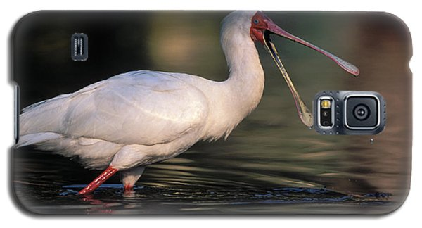 African Spoonbill Galaxy S5 Case by Nigel Dennis
