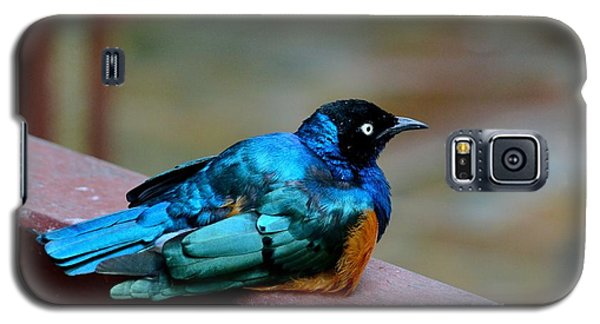 African Superb Starling Bird Rests On Wooden Beam Galaxy S5 Case
