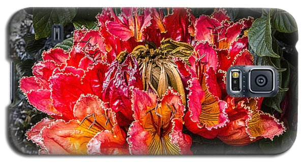 African Tulip Tree Flowers Galaxy S5 Case