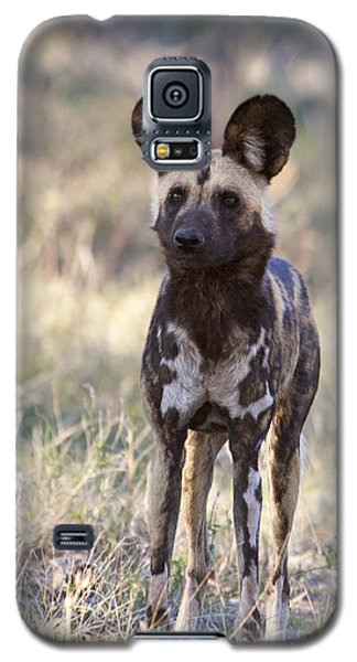 African Wild Dog  Lycaon Pictus Galaxy S5 Case