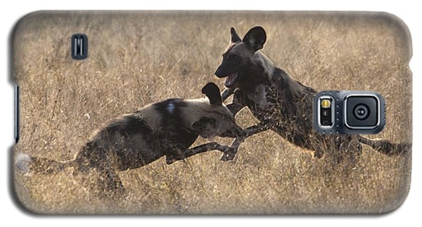 African Wild Dogs Play-fighting Galaxy S5 Case