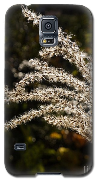 Galaxy S5 Case featuring the photograph After Summer by Inge Riis McDonald