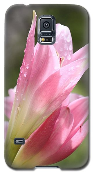 Galaxy S5 Case featuring the photograph After The Rain by Amy Gallagher