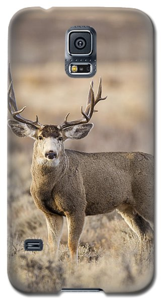 Afternoon Buck Galaxy S5 Case